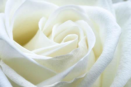 1555605824-wedding_Gift_Certificate.jpg